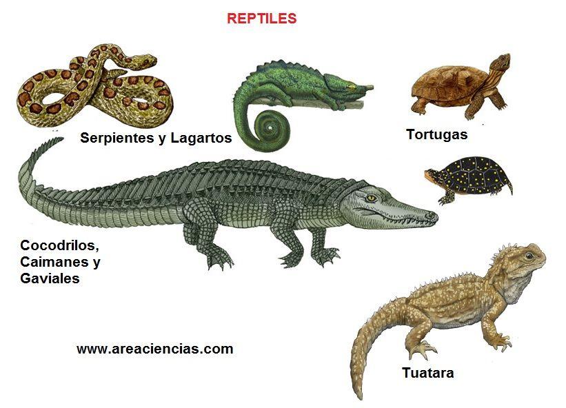 Q Son Los Reptiles Naturalesmovera6 - VER...